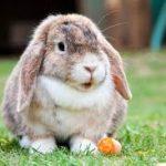 Die Kaninchen WG - ein neues Kaninchen kommt ins Haus