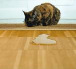 Verhalten: Unsauberkeit bei Katzen