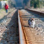 Reisen mit Tieren: Leishmaniosegefahr