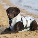 Suitical Dry Kühlweste für den Hund