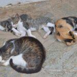 Tierschutz - Kastration von Streunerkatzen